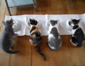 Speciál pro milovníky koček: 5 pravidel pro správné krmení