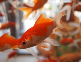 Akvárium a Feng-Šuej: Přivolejte prosperitu